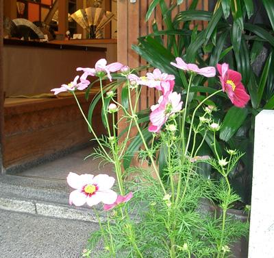 images/kosumosu.jpg